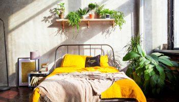 Luchtzuiverende kamerplanten voor een gezond binnenklimaat