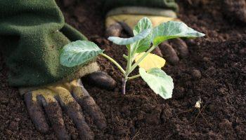 goede grond,moestuin, grond, groener wonen