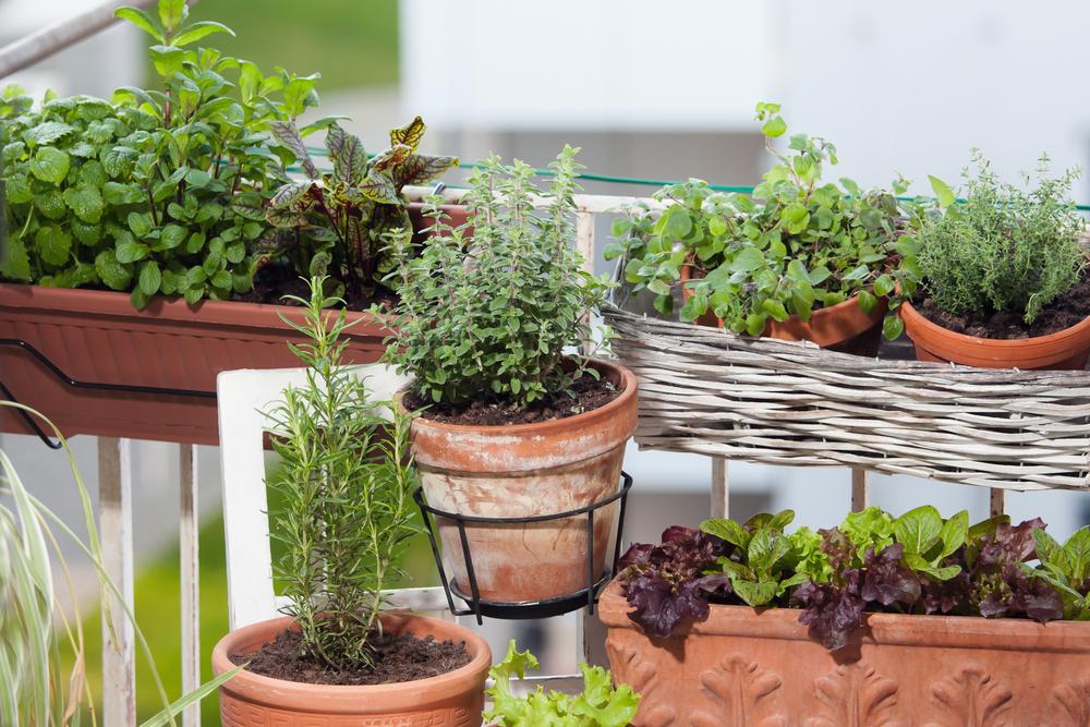 moestuin balkon, potten en bakken, tuinieren, groener wonen