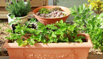 moestuin, potten en bakken, groener wonen