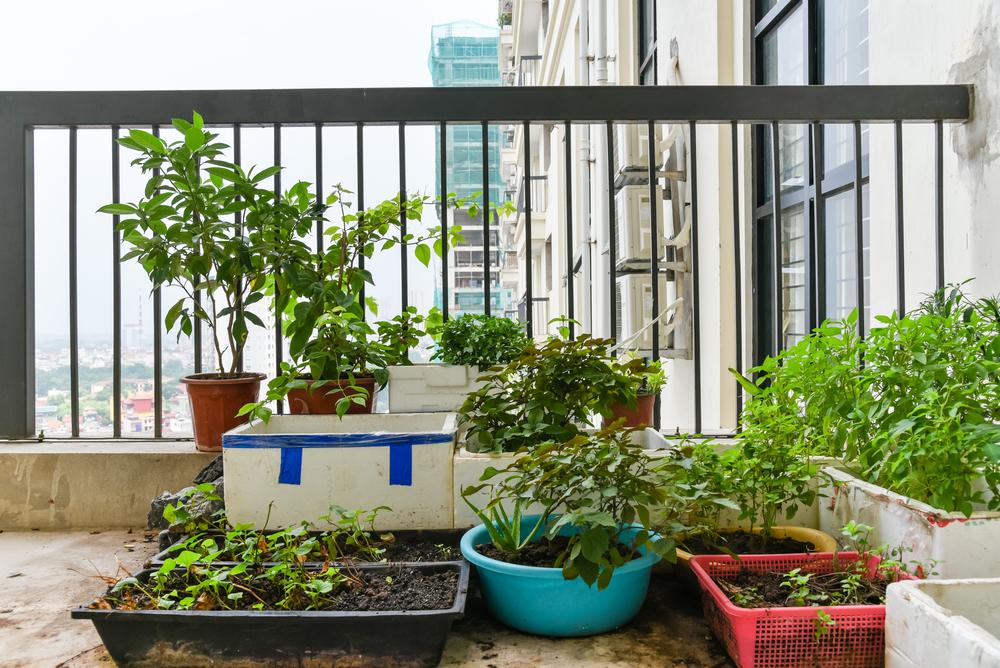 moestuin, balkon, zelf kweken, plek voor je moestuin, Groener Wonen
