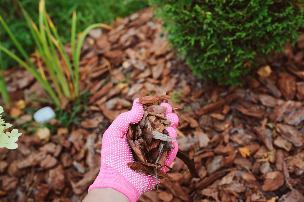 mulchen, goede grond, moestuin, grond, mulchlaag, groener wonen