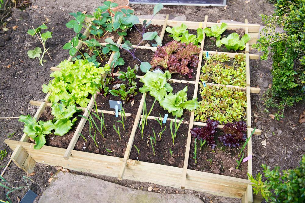 potten en bakken, moestuin, vierkantemetermoestuin, groener wonen