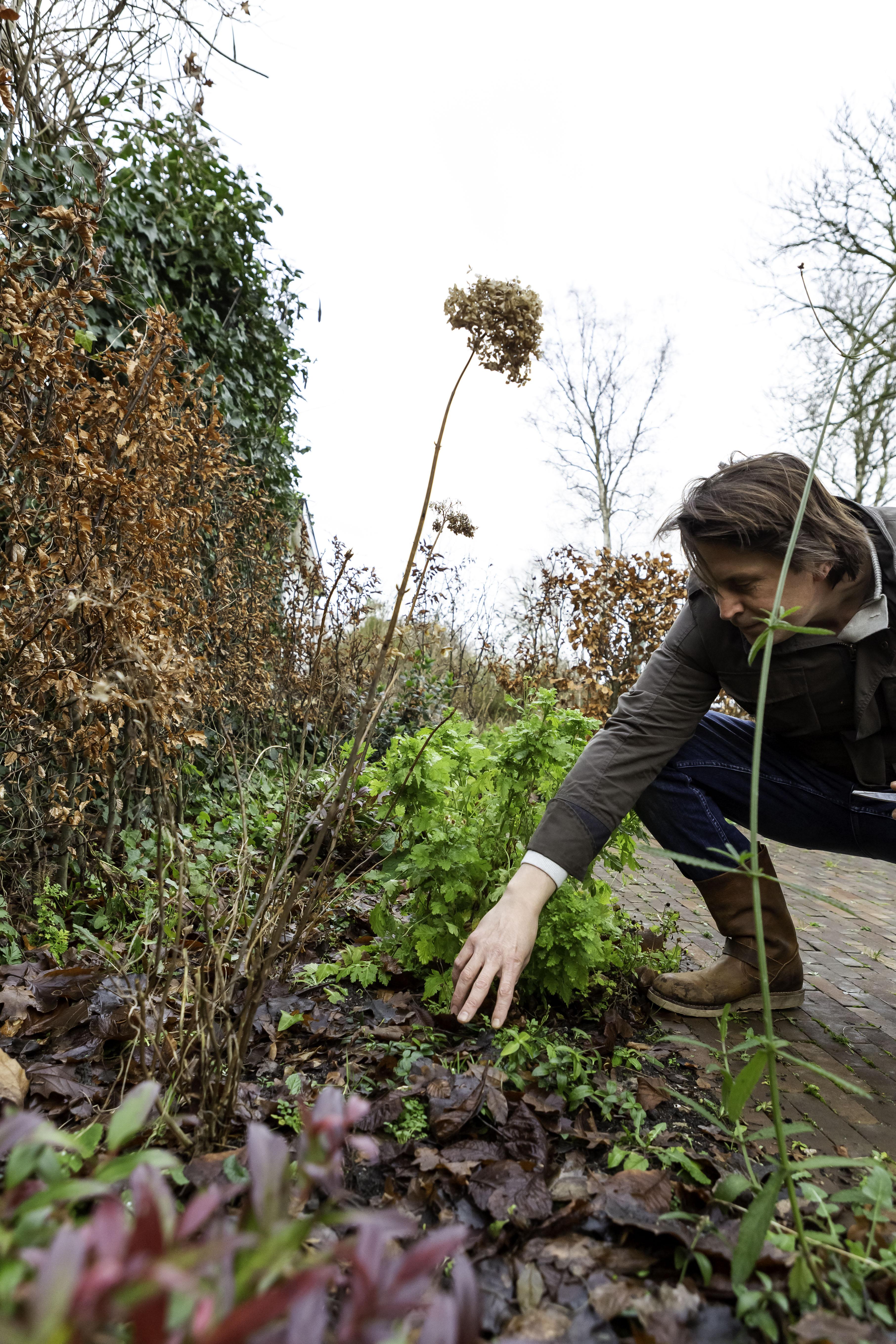 Tips voor een duurzame tuin, Lodewijk Hoekstra, duurzaam tuinieren, tuin, Groener Wonen