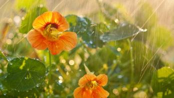 Waterinfiltratie in de tuin