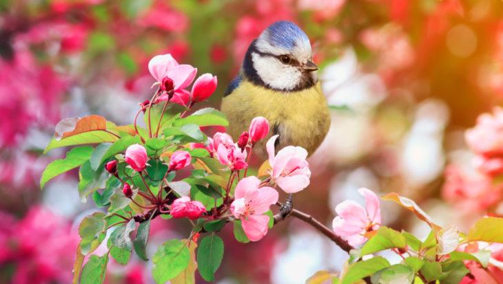 Dit eten vogels in het voorjaar en zomer