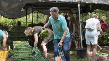 Eigen duurzame groenten, zonder vuile handen