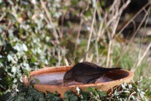 Levende tuin - vogels in de tuin