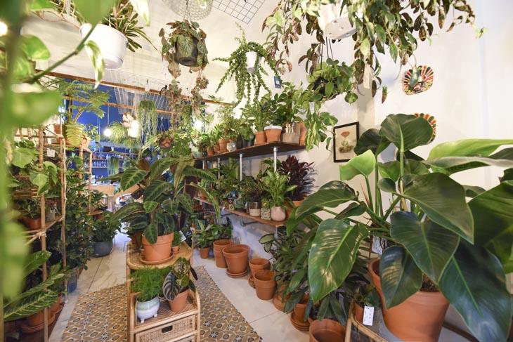 Plantencafé Broesse in Gent