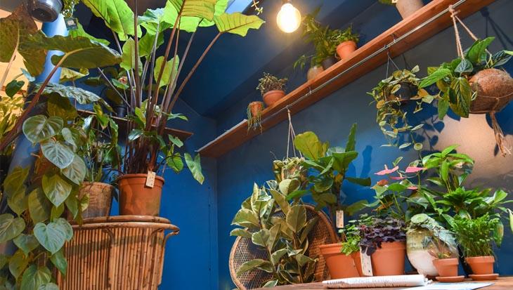 Plantencafé Broesse licht