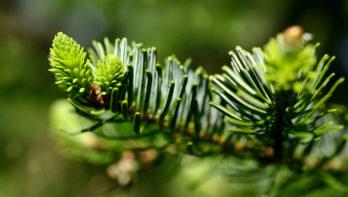 Kerstboom hergebruiken in de tuin