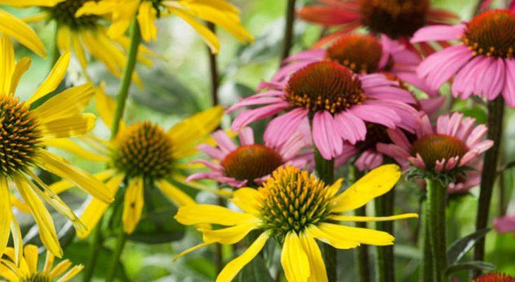 Bloemen beplantingsplan natuurlijke tuin