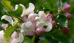 Fruitboom beplantingsplan natuurlijke tuin