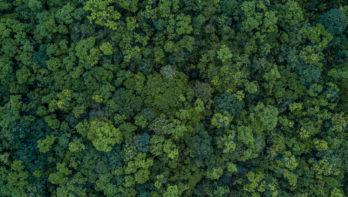 Tuiny Forests maken Nederland groener