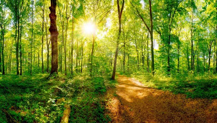 Overheid wil 10% meer bos in Nederland