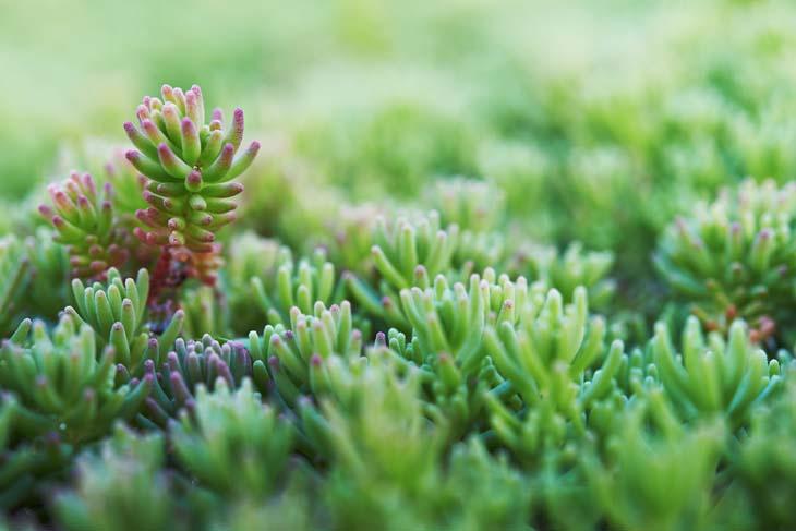 Groendak planten