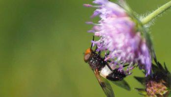 Klimaatbestendige tuin: Werk mee met de natuur