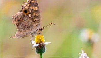 Tips voor een duurzame tuin - Aardoom hoveniers