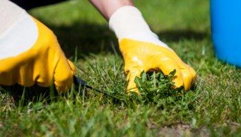 Onkruid verwijderen in de tuin