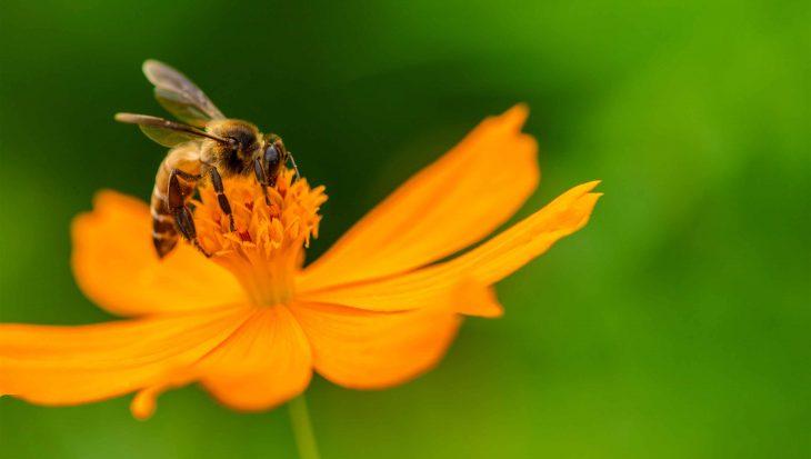 Bijen in de tuin lokken