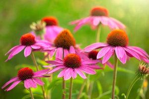Rode zonnehoed voor meer bijen en vlinders in de tuin
