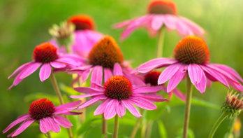 Duurzame tuin: Tips van een tuinontwerper
