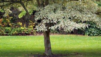 Miljoen gratis bomen voor klimaat en biodiversiteit