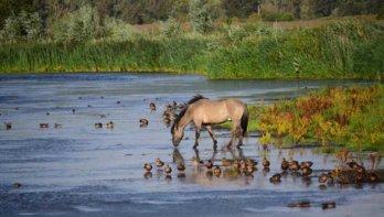 Kom op adem in de veelzijdige natuur van Nederland