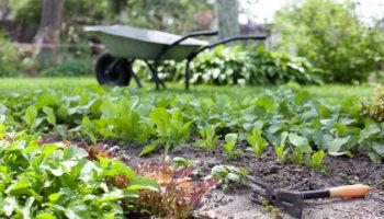 Duurzaam tuinontwerp