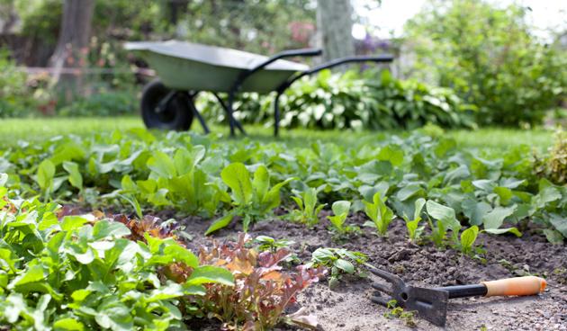 Een groene tuin aanleggen