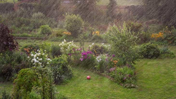 Regenwater opvangen in je tuin