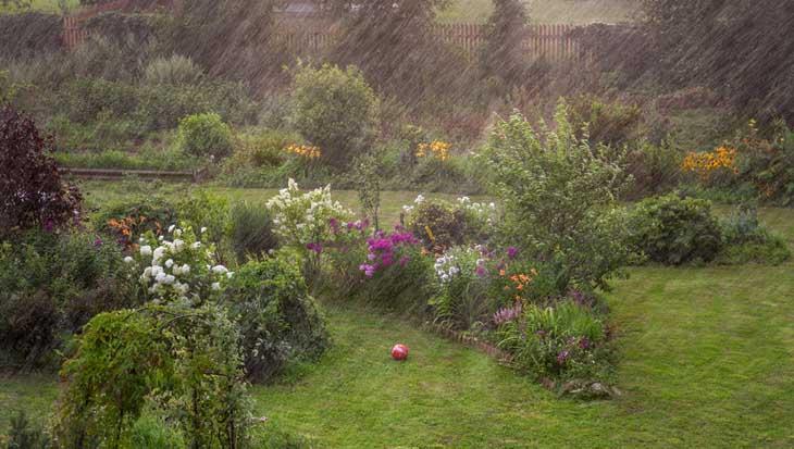 Regenwater opvangen in de tuin