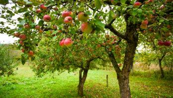 'Voedselbossen zijn gastvrij voor mens en natuur'