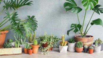 Planten gered van de afvalbak
