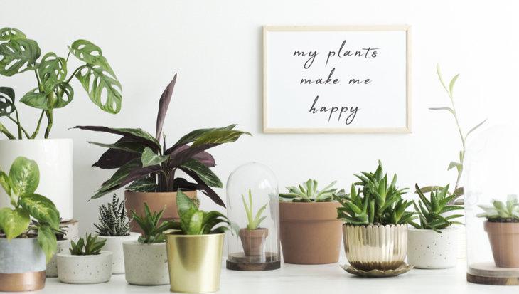 Ga dit voorjaar voor de leukste planten